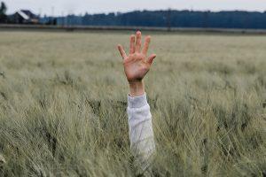 Hand ragt aus Getreidefeld