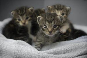 Vier kleine Kätzchen sitzen in einem Korb