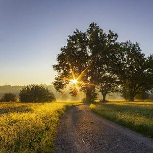 Sonne geht hinter einem Baum auf